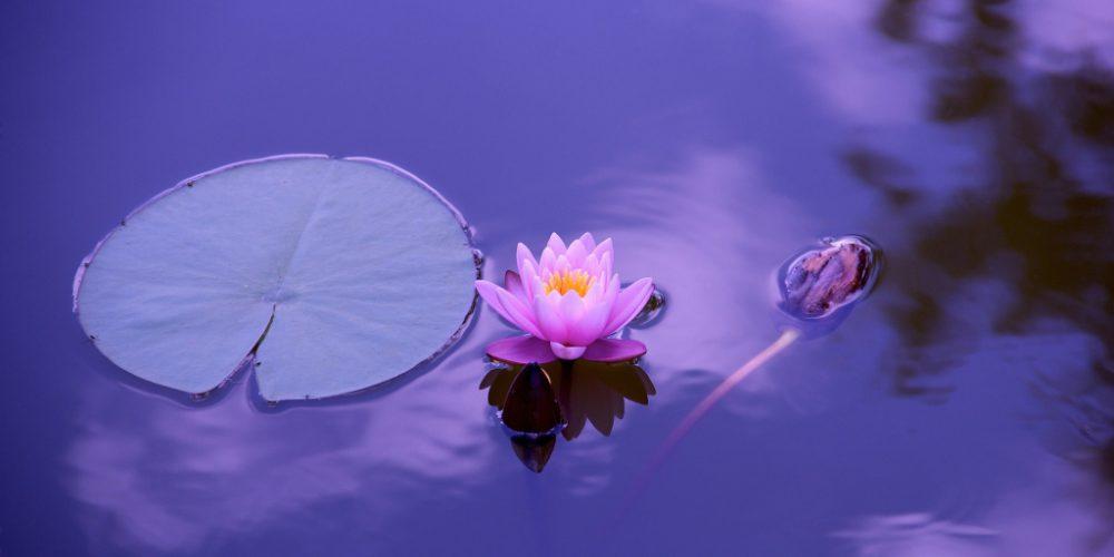 Yoga Mindfulness: corpo, mente ed emozioni in equilibrio – Punto per Punto