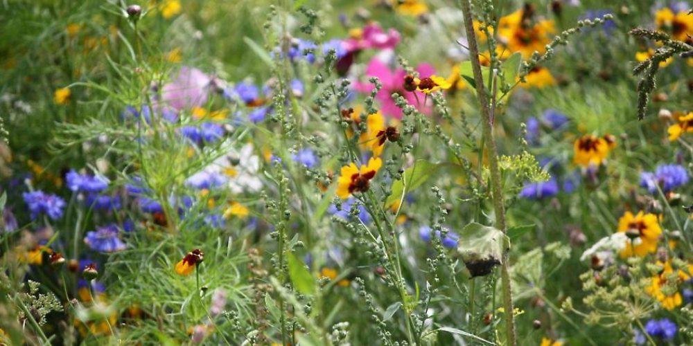 Componi il tuo Bouquet di Benessere BioNaturale – Punto di Forza
